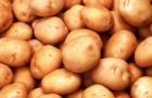 Картофель - самый выгодный овощ