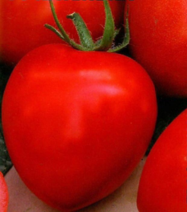 Сорт томата: Катенька   f1