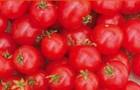Сорт томата: Керасо f1