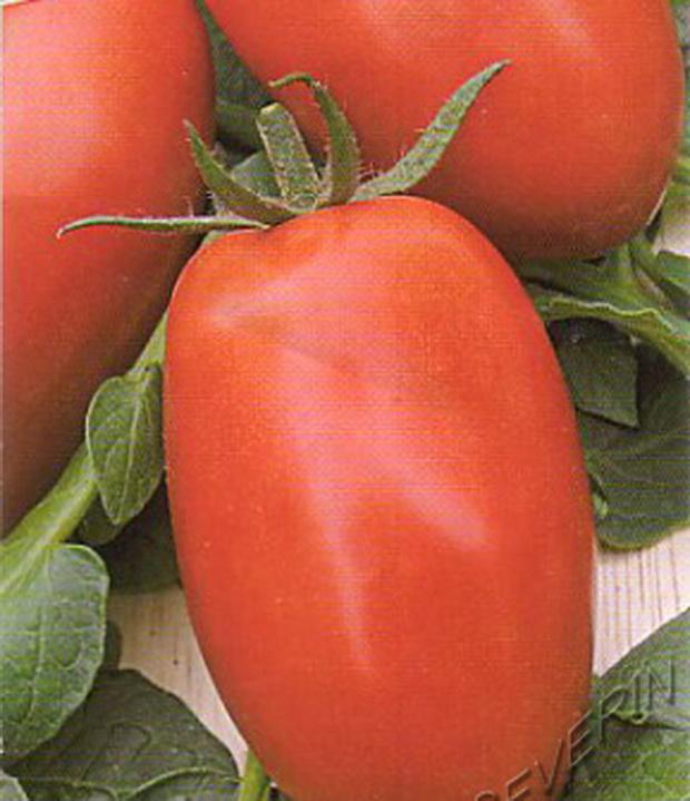 Сорт томата: Классик   f1