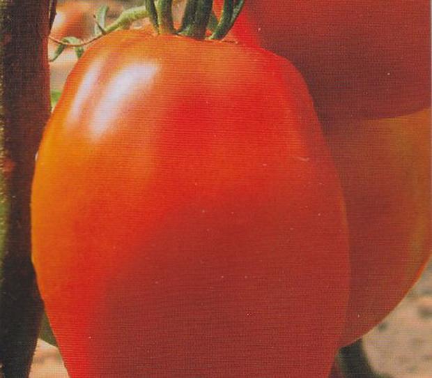 Сорт томата: Княгиня