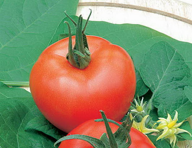 Сорт томата: Комиссар   f1