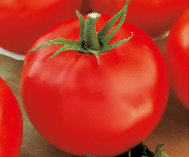 Сорт томата: Консул   f1