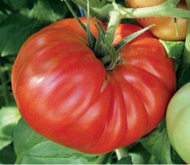 Сорт томата: Космос   f1