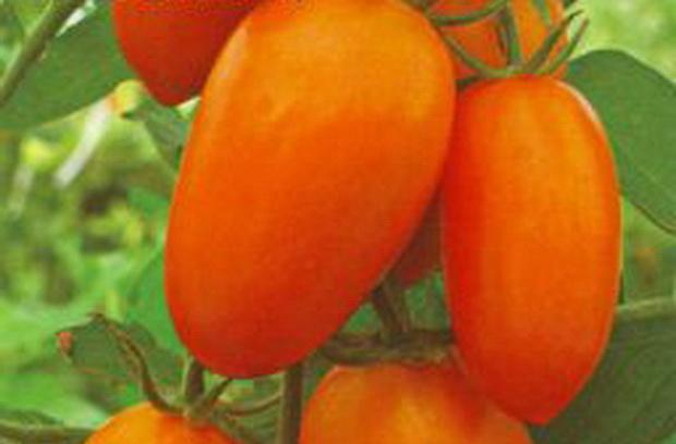 Сорт томата: Красавица москвы