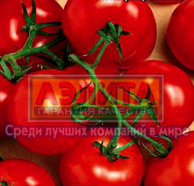 Сорт томата: Красная поляна
