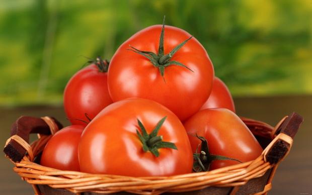 Сорт томата: Красногвардеец