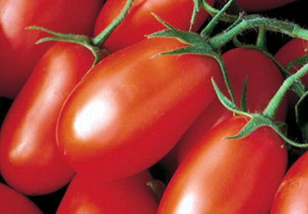 Сорт томата: Красный глобус