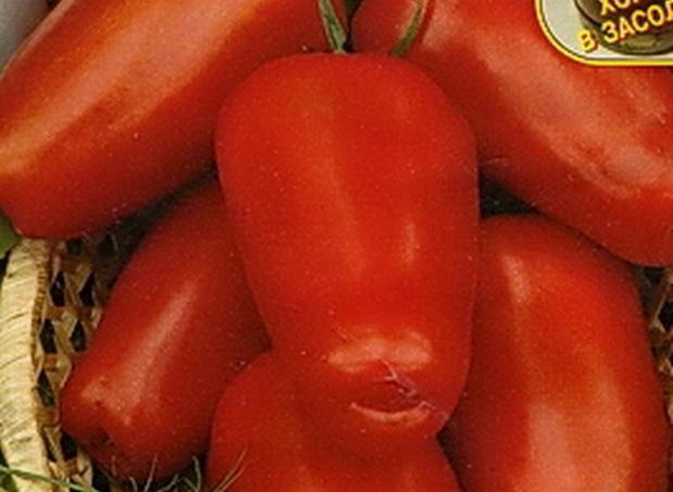 Сорт томата: Красный клык