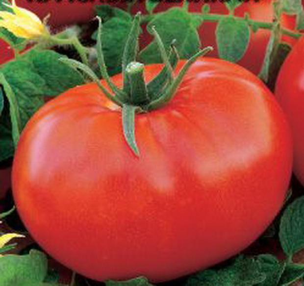 Сорт томата: Красный великан