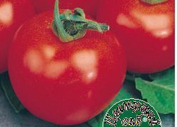 Сорт томата: Крайний север