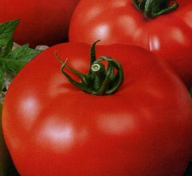 Сорт томата: Кремлевский   f1