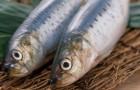 Крепкий посол рыбы для хранения