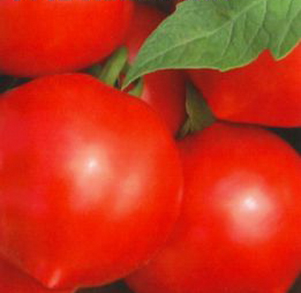 Сорт томата: Кривянский   f1