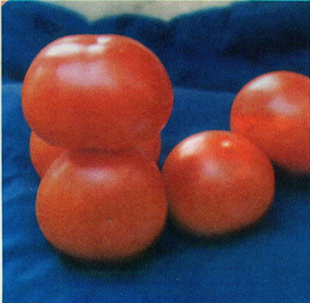 Сорт томата: Кронос   f1