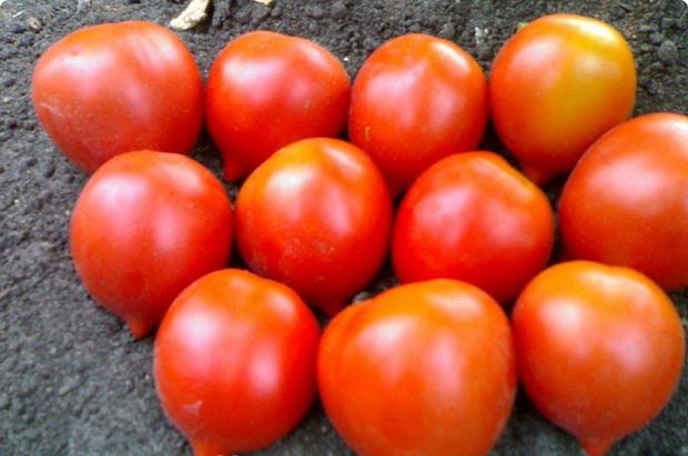 Сорт томата: Кронпринц