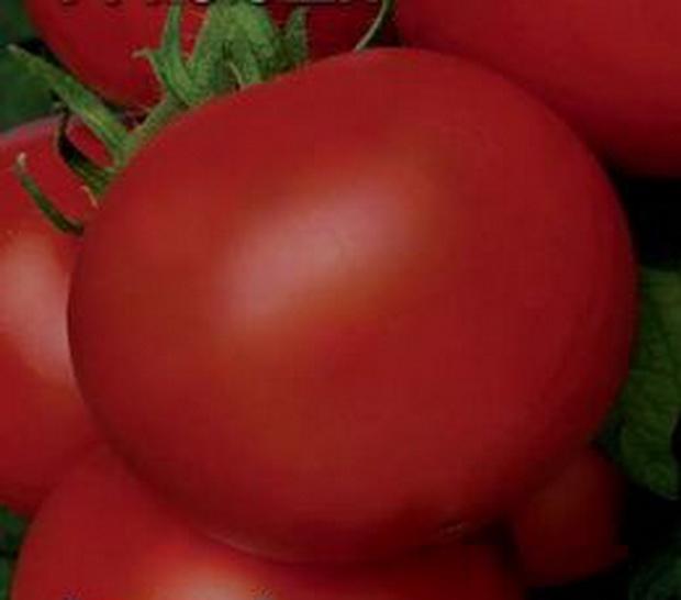 Сорт томата: Ксюша   f1