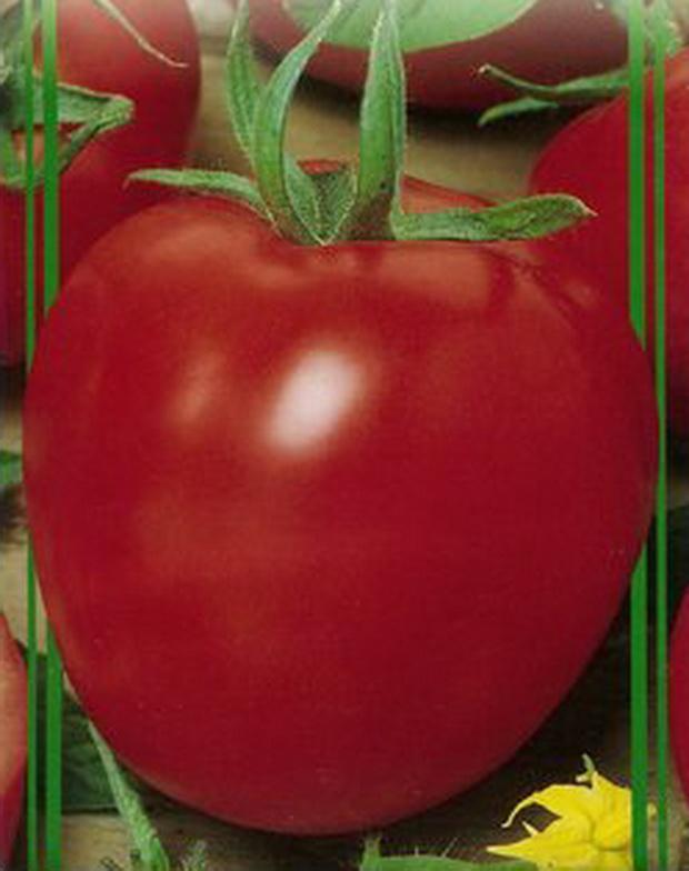 Сорт томата: Кубанец   f1