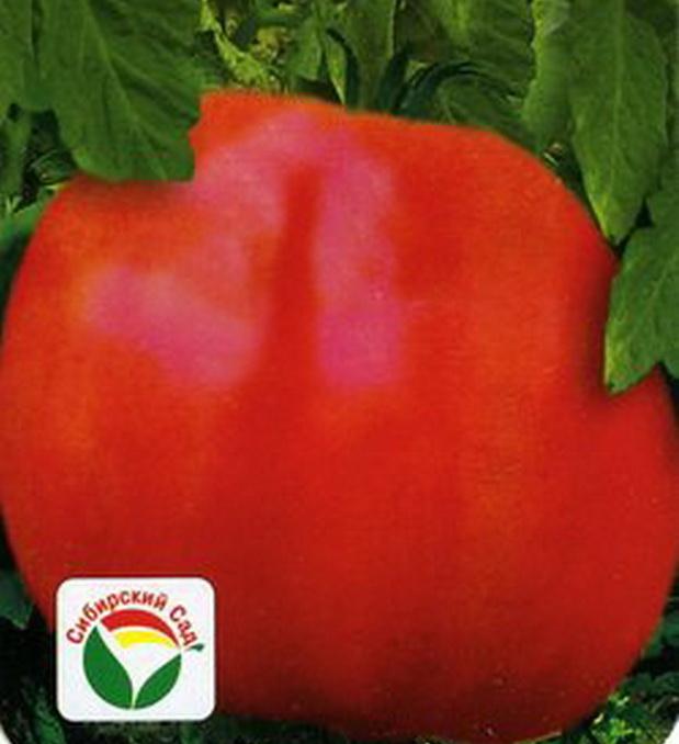 Сорт томата: Кубышка