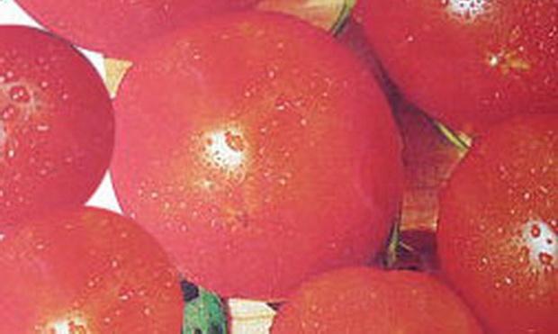 Сорт томата: Куплет   f1