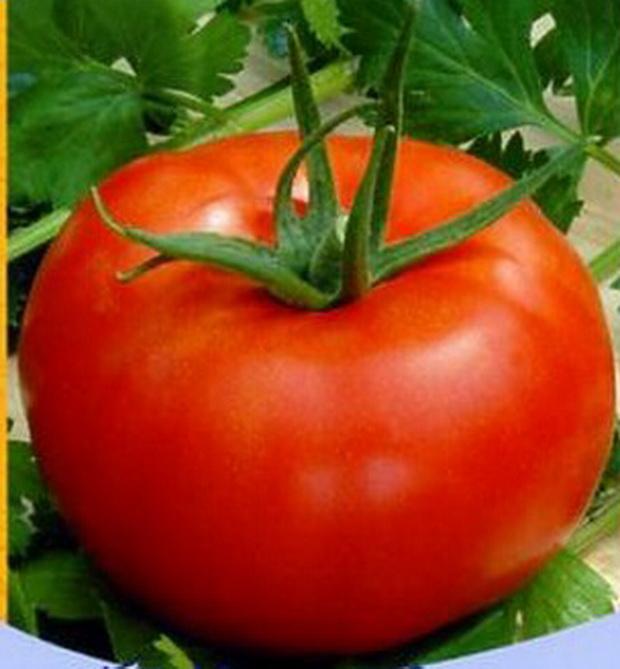 Сорт томата: Куршевель   f1
