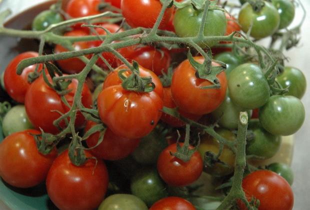 Сорт томата: Лайстелл   f1