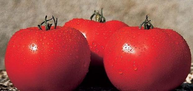 Сорт томата: Леандра   f1