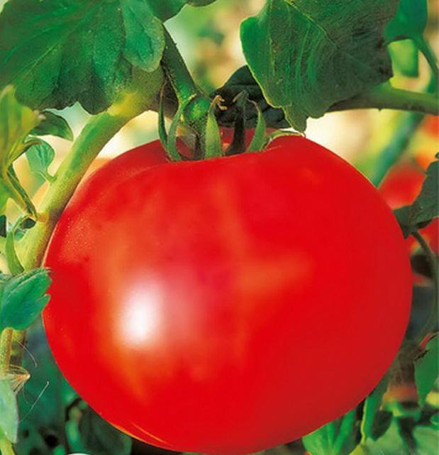 Сорт томата: Леля   f1