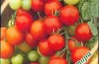 Сорт томата: Леопольд f1