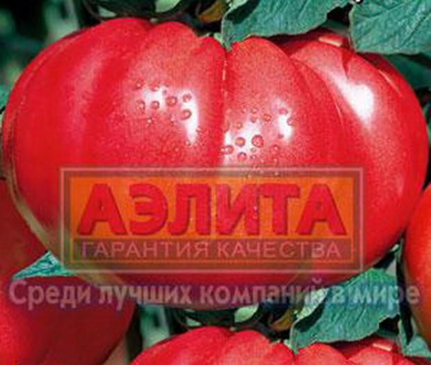Сорт томата: Левчик