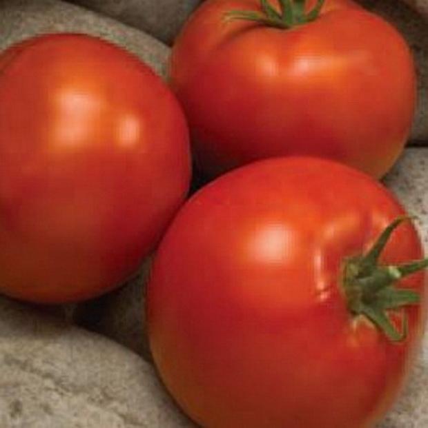Сорт томата: Линдос   f1