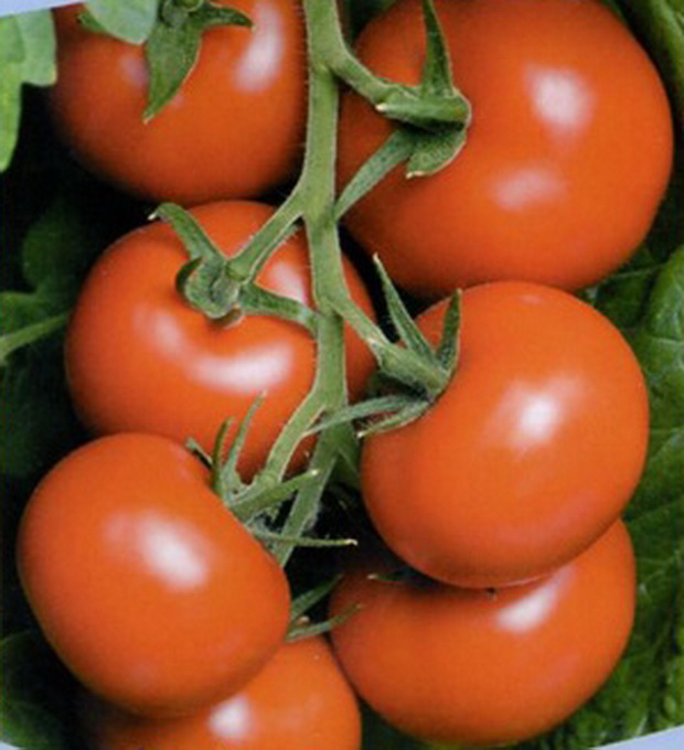 Сорт томата: Ливерпуль   f1