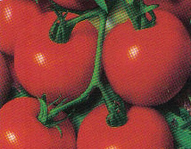 Сорт томата: Лия
