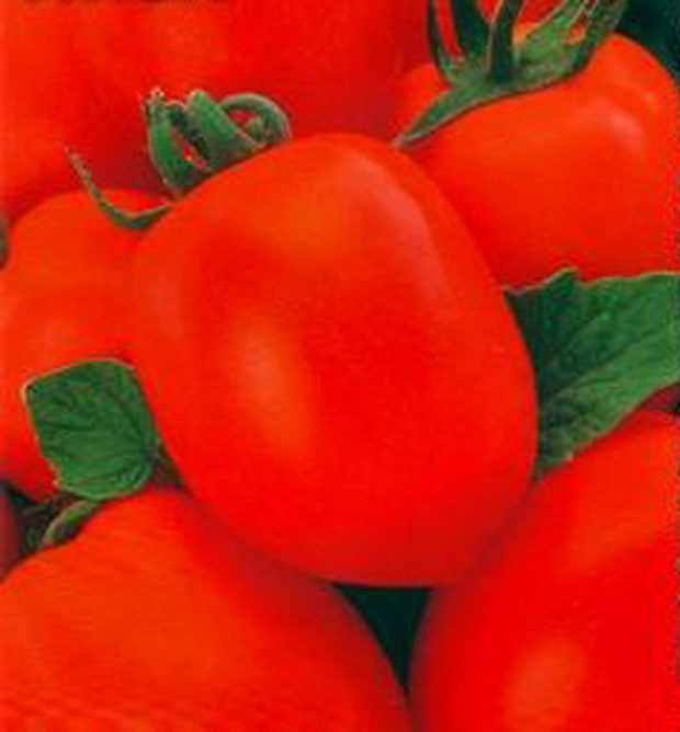 Сорт томата: Лиза