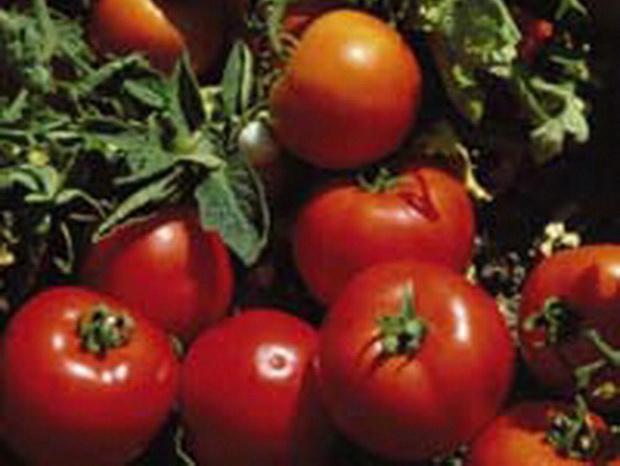 Сорт томата: Лоджейн   f1