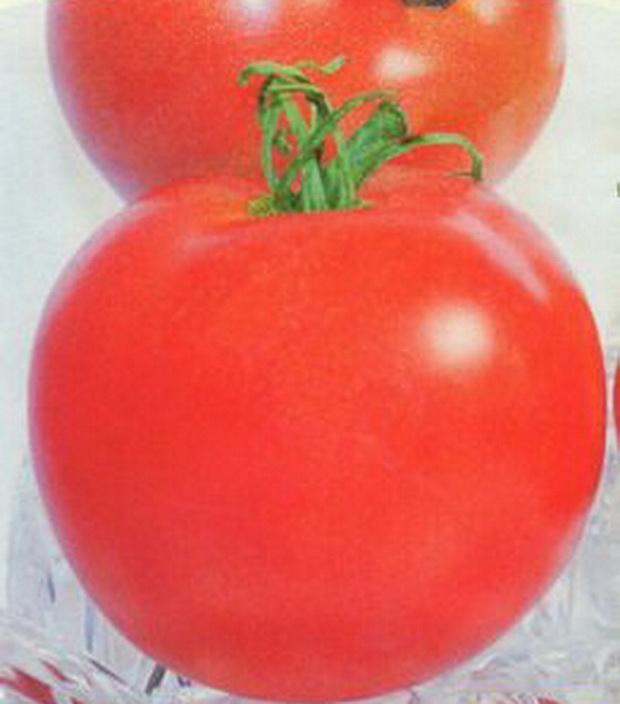 Сорт томата: Лола   f1