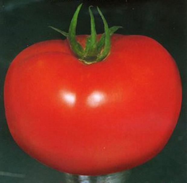 Сорт томата: Лонгф   f1