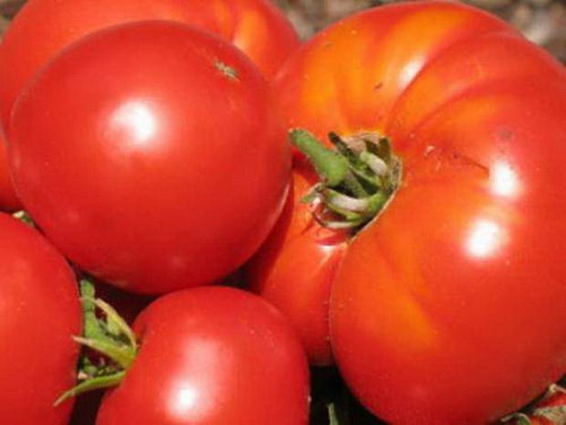 Сорт томата: Лотар   f1