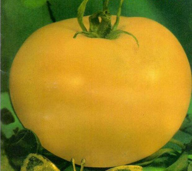 Сорт томата: Лотос