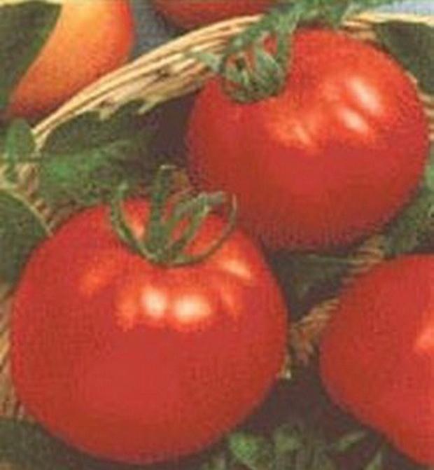 Сорт томата: Луксор   f1