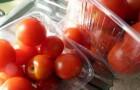 Сорт томата: Лунная соната