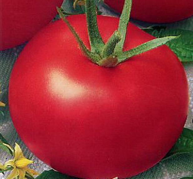Сорт томата: Ляна