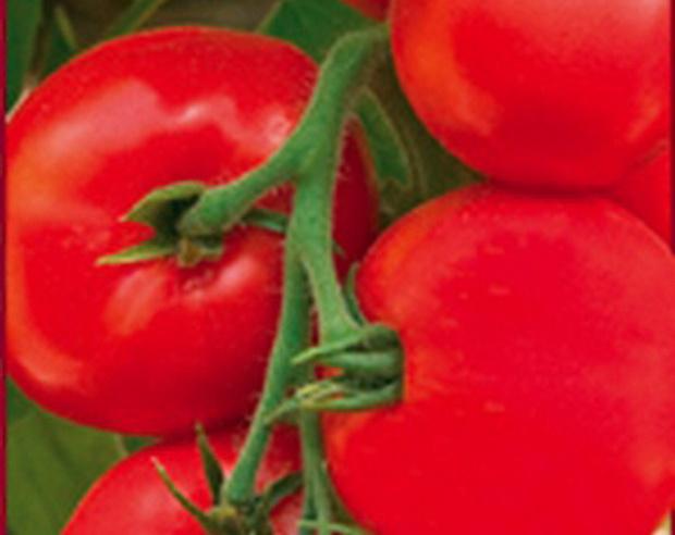 Сорт томата: Любава   f1