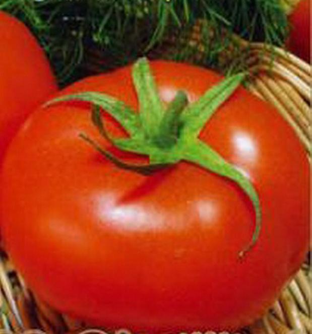 Сорт томата: Любимый король