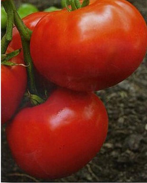 Сорт томата: Любовь земная   f1