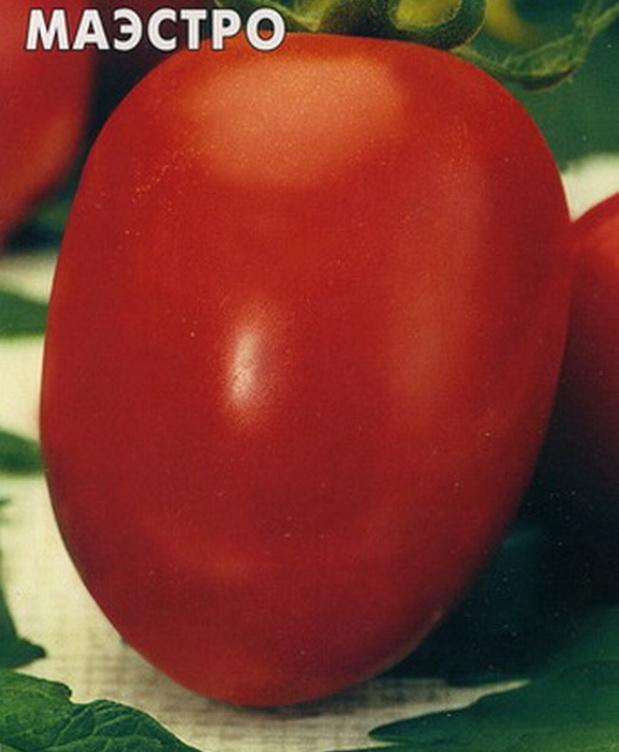 Сорт томата: Маэстро