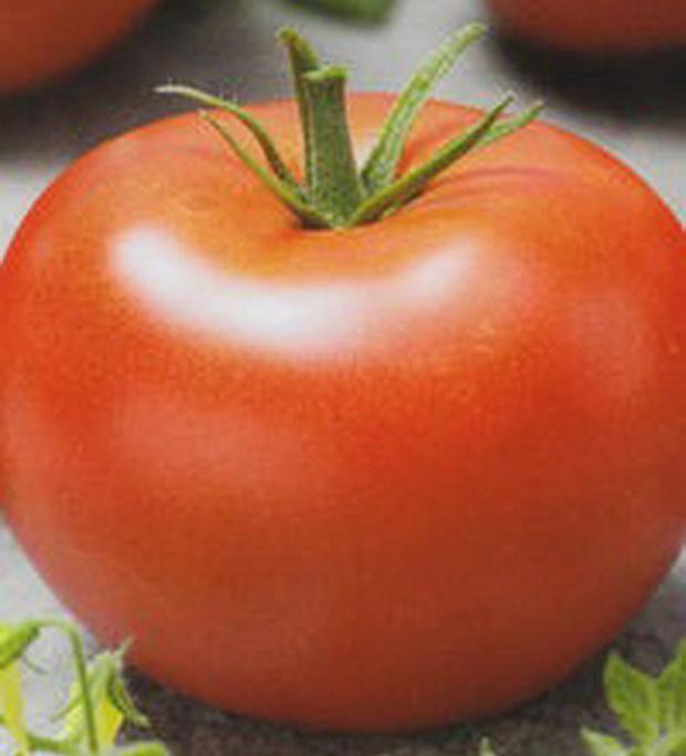 Сорт томата: Магнум 44   f1
