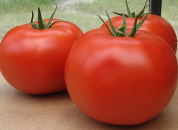 Сорт томата: Макарена   f1
