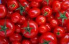 Сорт томата: Максимильян f1