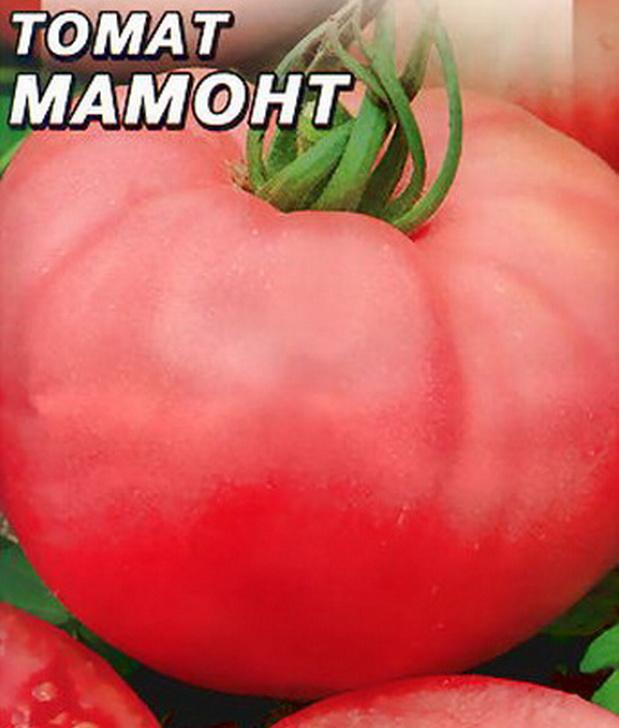 Сорт томата: Мамонт